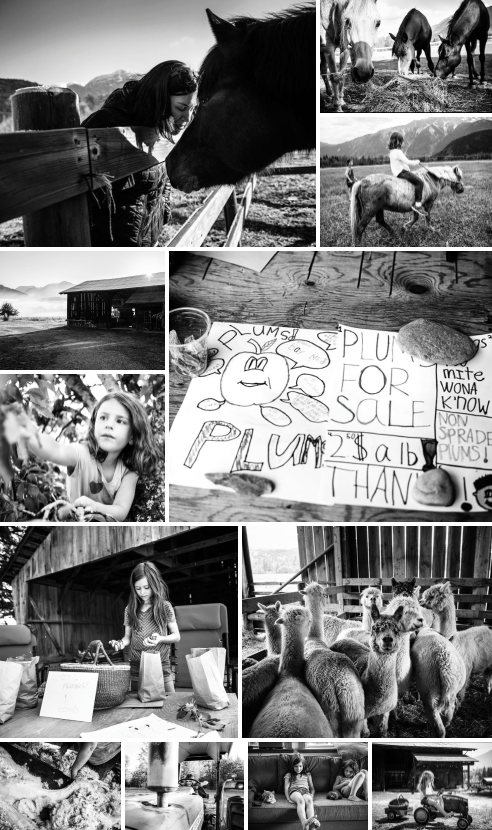 Farm Series by Kevin Arnold collage