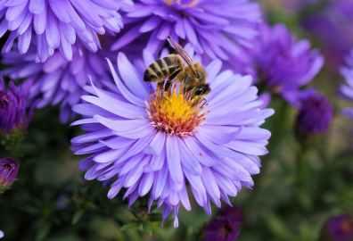 bee-flower-pollen-color-65656.jpeg