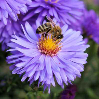 bee-flower-pollen-color-65656.jpeg